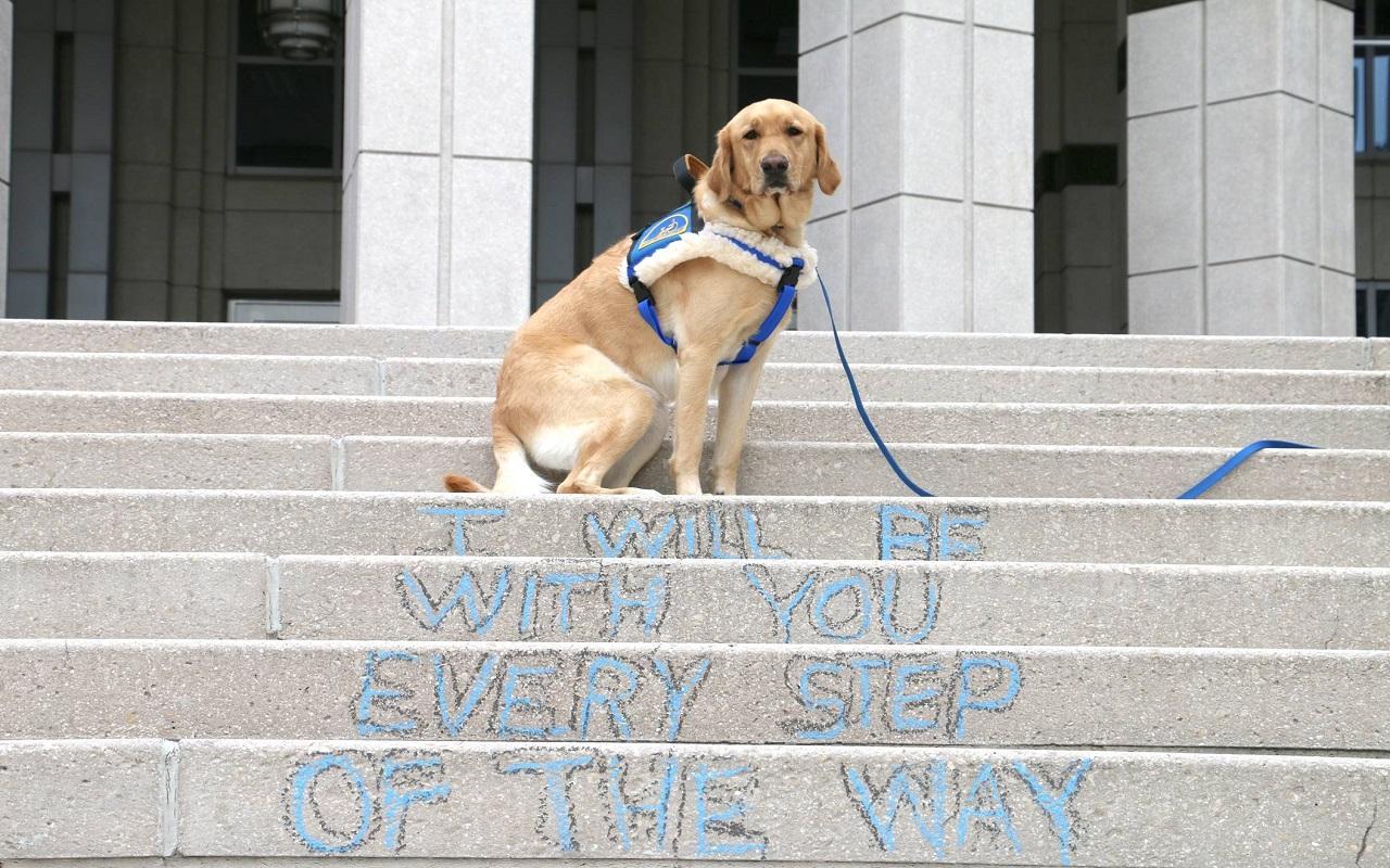 K9th Circuit Program - Tonx, therapy dog