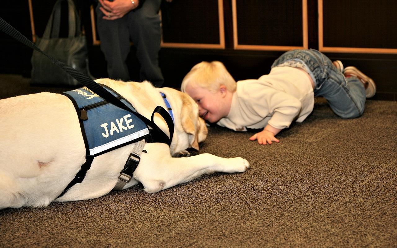 K9th Circuit Program - Jake, therapy dog