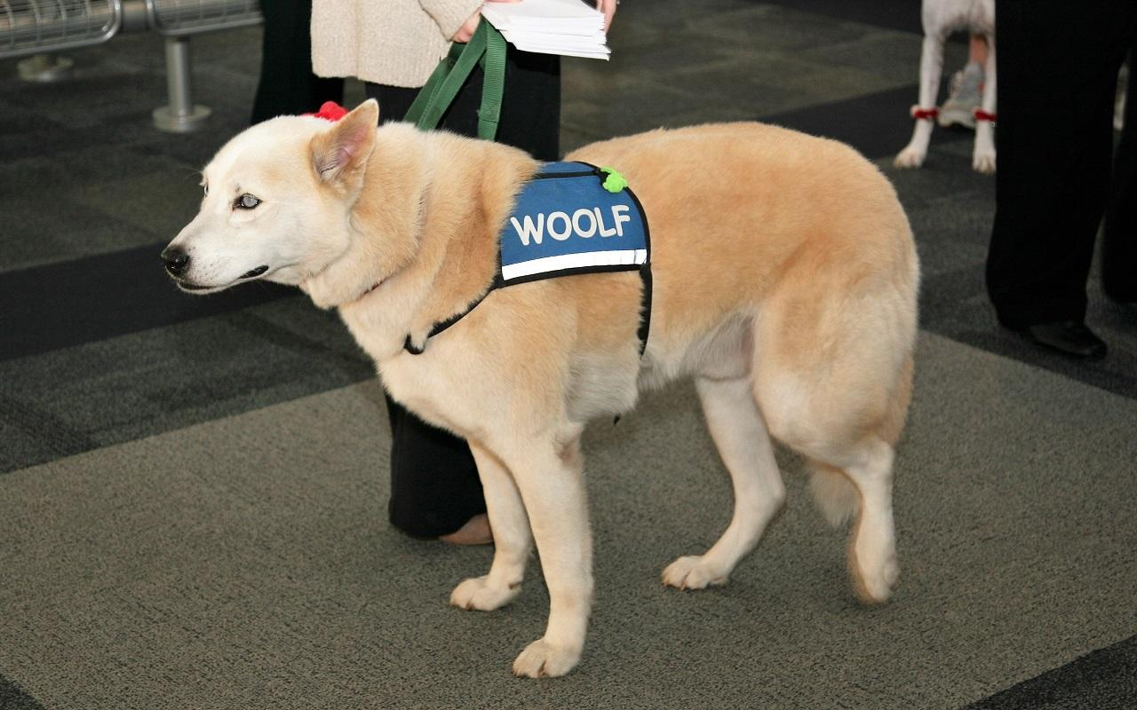 K9th Circuit Program - Woolf, therapy dog